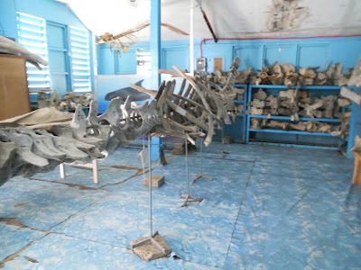 Whale Bone Museum